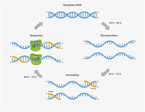 pcr cycling parameters six key considerations for success