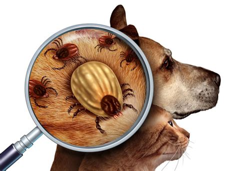 dogs and ticks tick season is here your dogs are at risk