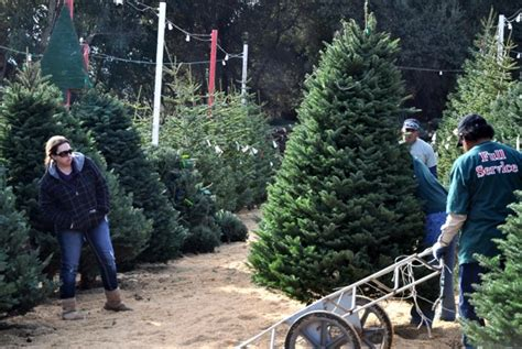 local christmas tree lots open in menlo park inmenlo