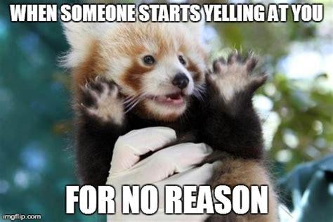 Red Panda Meme - the gallery for gt red panda meme generator
