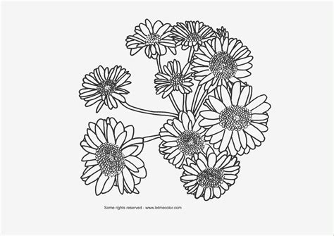 coloring pages of real flowers flowers letmecolor