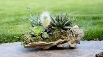 Succulent Table Centerpiece Rock Planter W Succulents Air Plants Amp Cacti Youtube