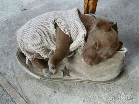 sweaters for pitbulls sweaters for pitbulls dress the clothes for your pets