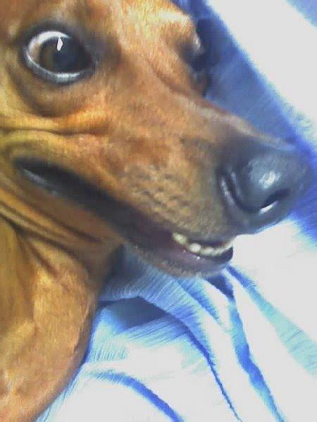 puppy troll troll by astonish90 on deviantart