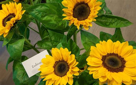 fiori recisi fiori recisi zubini