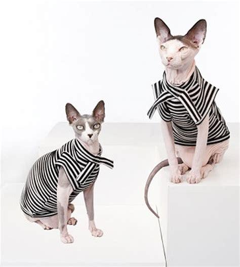 cat fashion cat chic 10 furrocious feline fashion designers catster