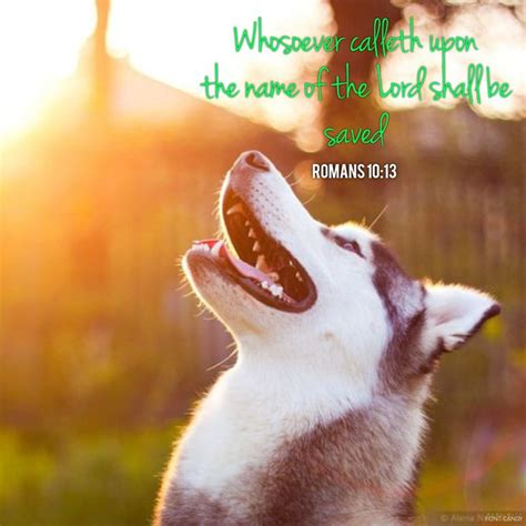 bible verses about dogs 1000 images about bible verses on romans bible verse and the lord