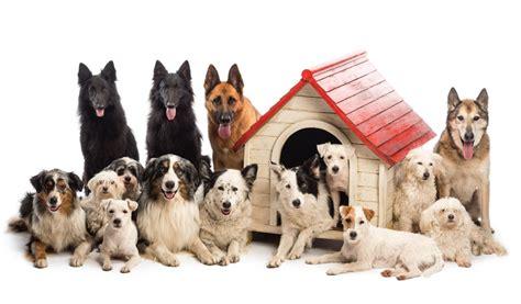 i migliori alimenti per cani le migliori crocchette biologiche per cani petyoo