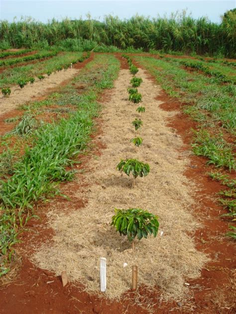 The Role of Weed and Cover Crops on Soil and Water Conservation in a Tropical Region   InTechOpen