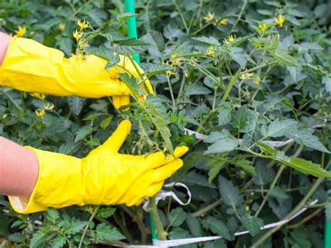 summer gardening summer gardening ideas tips hgtv