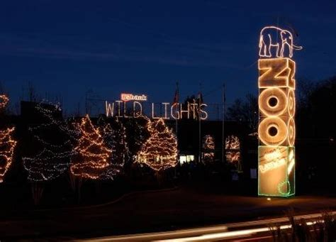 The Top Holiday Light Displays In St Louis St Louis St Louis Zoo Lights