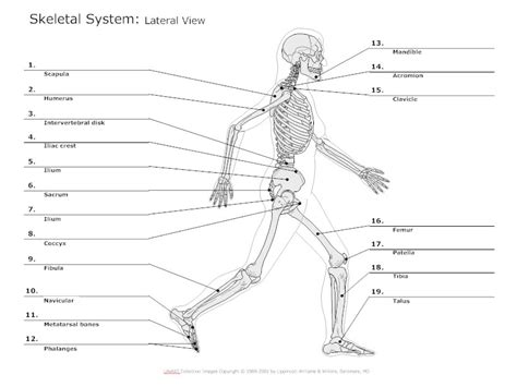 human bones diagram skeletal system diagram types of skeletal system