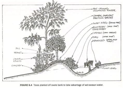 keyline design definition permaculture s dogma problem liberation ecology