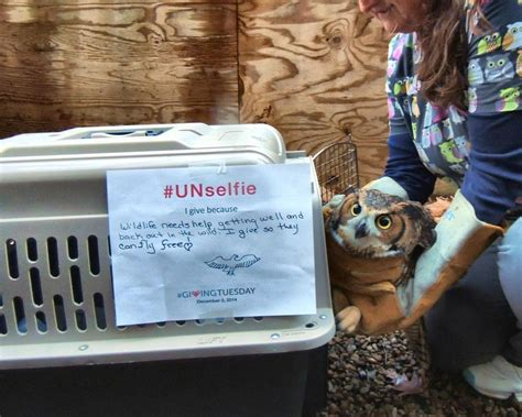 Giving Tuesday 2014 The Wildlife Center Of Virginia Unselfie Giving Tuesday Template
