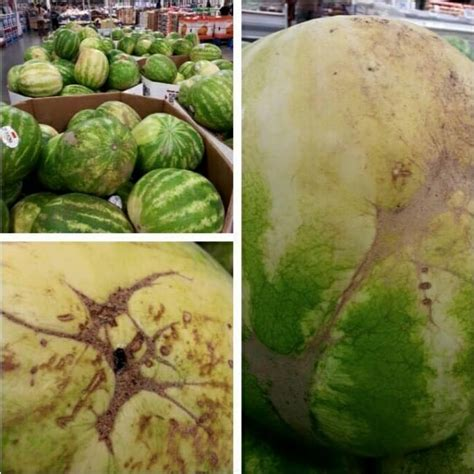 how to pick the perfect watermelon 5 tips from an