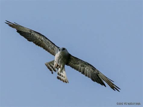 top 28 birds san diego san diego birds east county
