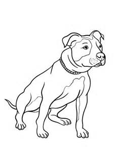 17 images pit bull color pages pencil drawings coloring pages