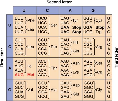 Genetic Code Table by Image Gallery Mrna Table