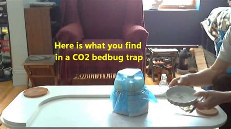 how to make a bed bug trap co2 bedbug trap making co2 youtube