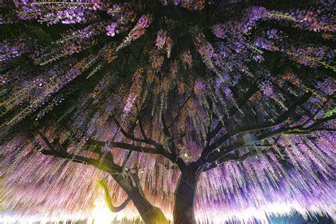 striking       beautiful trees