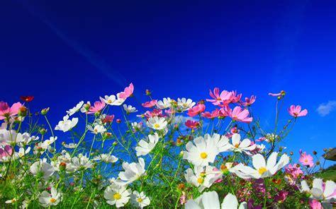 Blume Mit Rosa Blüten by Die 67 Besten Natur Und Blumen Hintergrundbilder