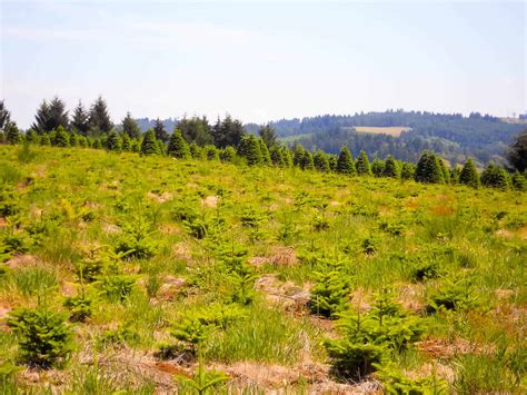 christmas tree property in oregon tree farm property for sale in oregon
