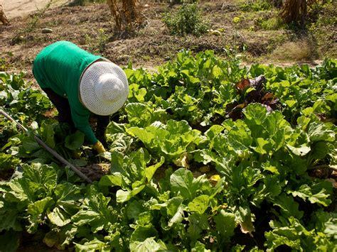 Water Saving Tips For Your Vegetable Garden Capradio Org Sacramento Vegetable Gardening