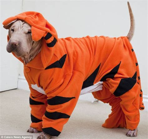 onesie for dogs hairless shar pei needs primark onesie to keep warm
