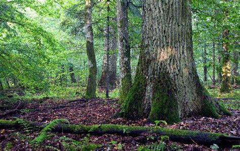 los bosques ibericos practicos lugares para visitar en luxemburgo qu 233 ver qu 233 hacer