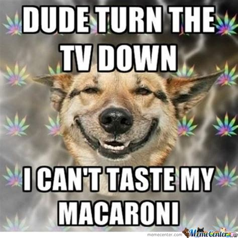 high dogs marijuana memes best collection of marijuana