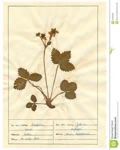herbarium sheet 6 30 royalty free stock images image 24050269