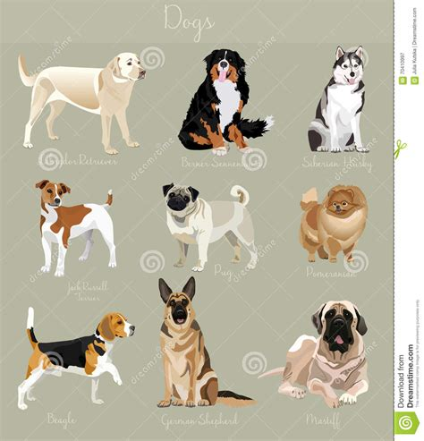 Small Animals Type C different type of dogs set big and small animals stock vector illustration of design