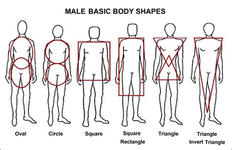 body types and shapes male body types