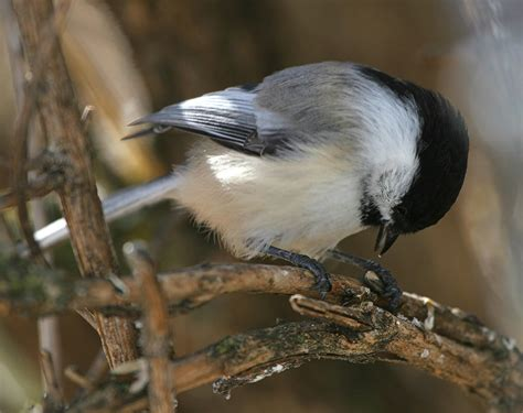 princeton landing news nature guide mixed feeding groups