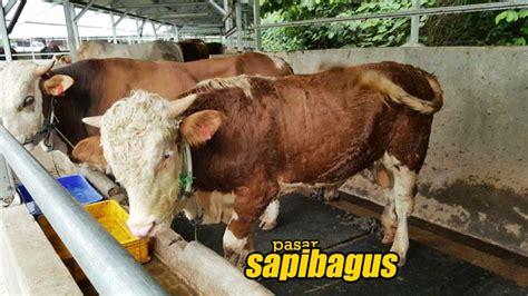 Jual Daging Sapi Impor by Pemerintah Cabut Sistem Kuota Impor Bakalan Sapi Dan