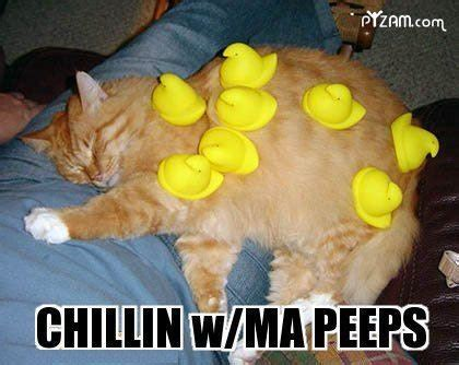 Happy Easter Meme - 11 funny peeps memes for easter because this holiday