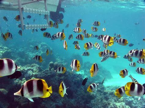wallpaper bawah laut terbaru bangiz