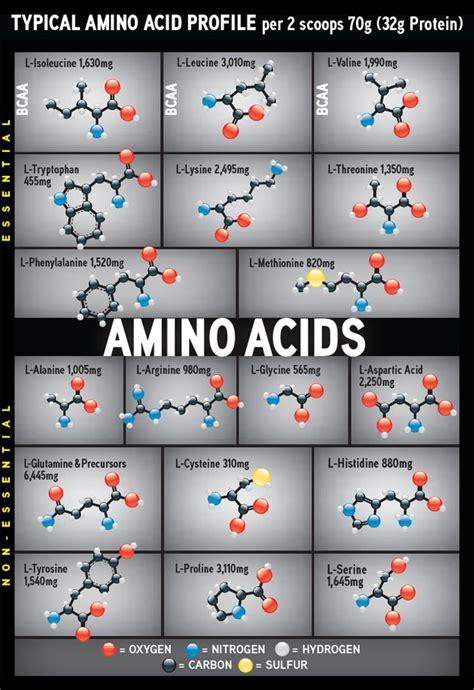 creatine 2g per day cytosport zestaw milk 4 5 kg amino 6 1 1