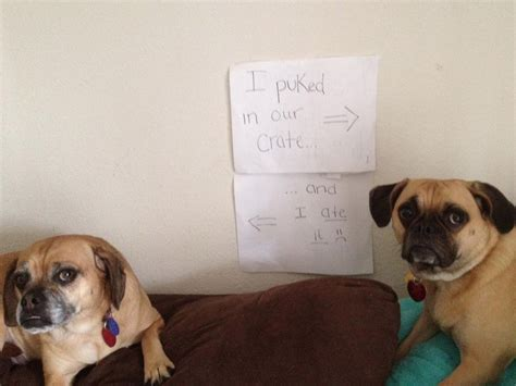 signs of in dogs 50 guilty dogs with written signs on what they did is wrong the wondrous