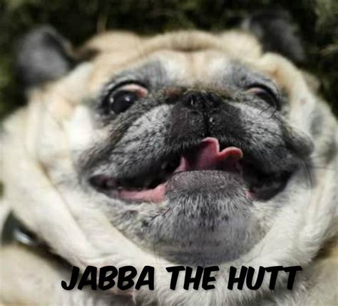 Fat Dog Meme - they call you jabba the hutt for a reason help