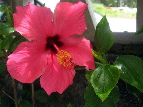 imagenes de flores que dan frutos angiospermas tienen flores y producen frutos que contienen