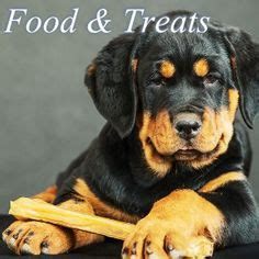 1000 images about rottweiler on pinterest walking nutritional 1000 images about rottweiler food and treats on pinterest