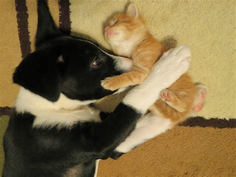 how to a cat and to get along cats and dogs get along 35 pics amazing creatures