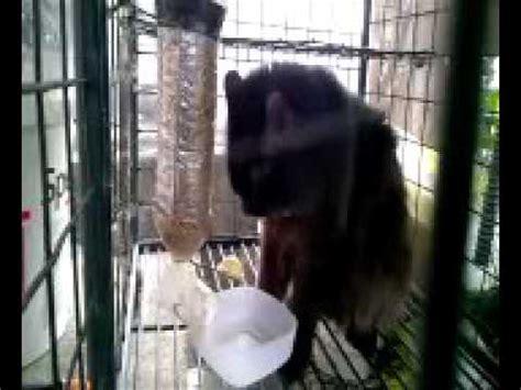 Tempat Pakan Burung Tabung yphb membuat tempat makanan burung dari barang bekas
