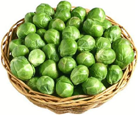 Vegetable L by Brassica Vegetable 100 Professional Seeds Evesham