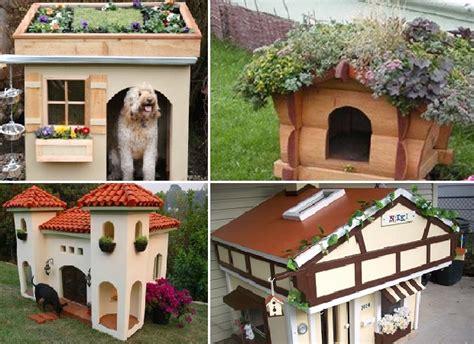 crazy dog houses dog houses dublin pet cosy dog houses