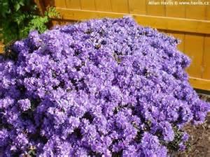 flowering evergreen shrubs zone 5