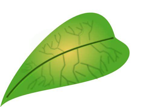 green leaf   svg   vector