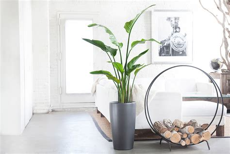 Decorative Shelves Home Depot by 10 Best Indoor Plants For Men Gear Patrol