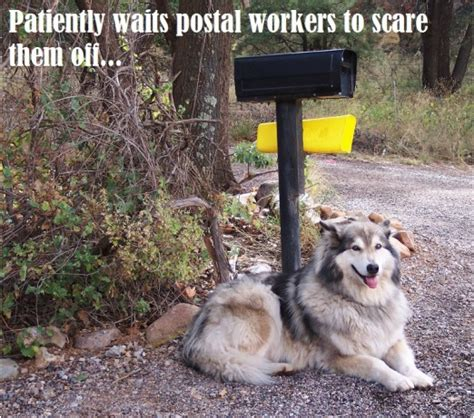why do dogs bark at the mailman three reasons dogs the mailman discoveries